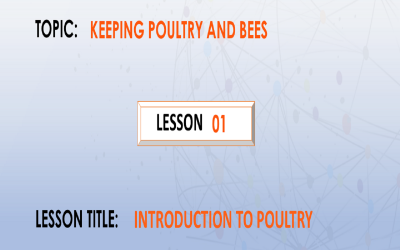 01. Introduction to poultry