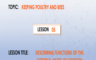 05. Describing functions of external parts of chickens