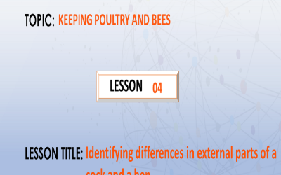 04. Identifying differences in external parts of a cock and a hen