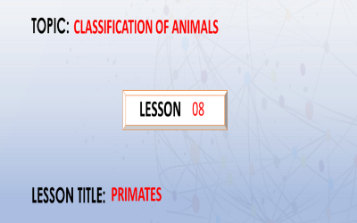 8.  Introduction To Primates