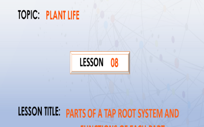 08. Parts of a tap root system and their functions.