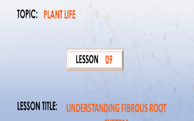 09. Understanding the fibrous root system