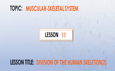 11.  Divisions of the skeleton (The Appendicular Skeleton).