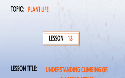 13. Describing climbing or clasping stems.