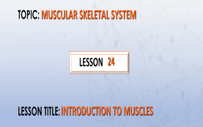 24. Introduction to muscles.